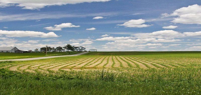Чем грозит неиспользование земельного участка